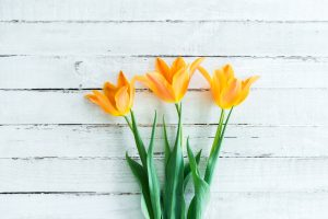 Three yellow spring flowers